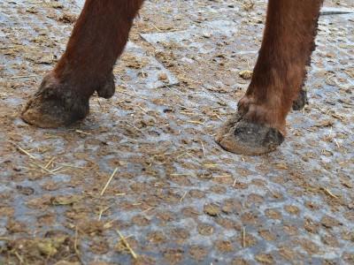 Piso Lomax Kraiburg - Area com formação de lama